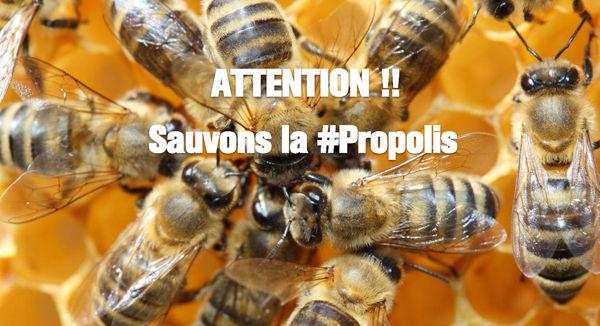 Sauvons la Propolis